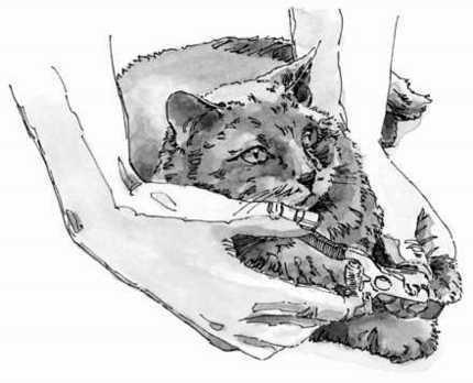 Clipping uñas de su gato