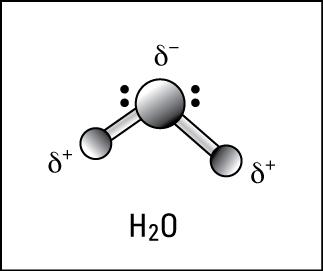 Las inusuales propiedades de las moléculas de agua